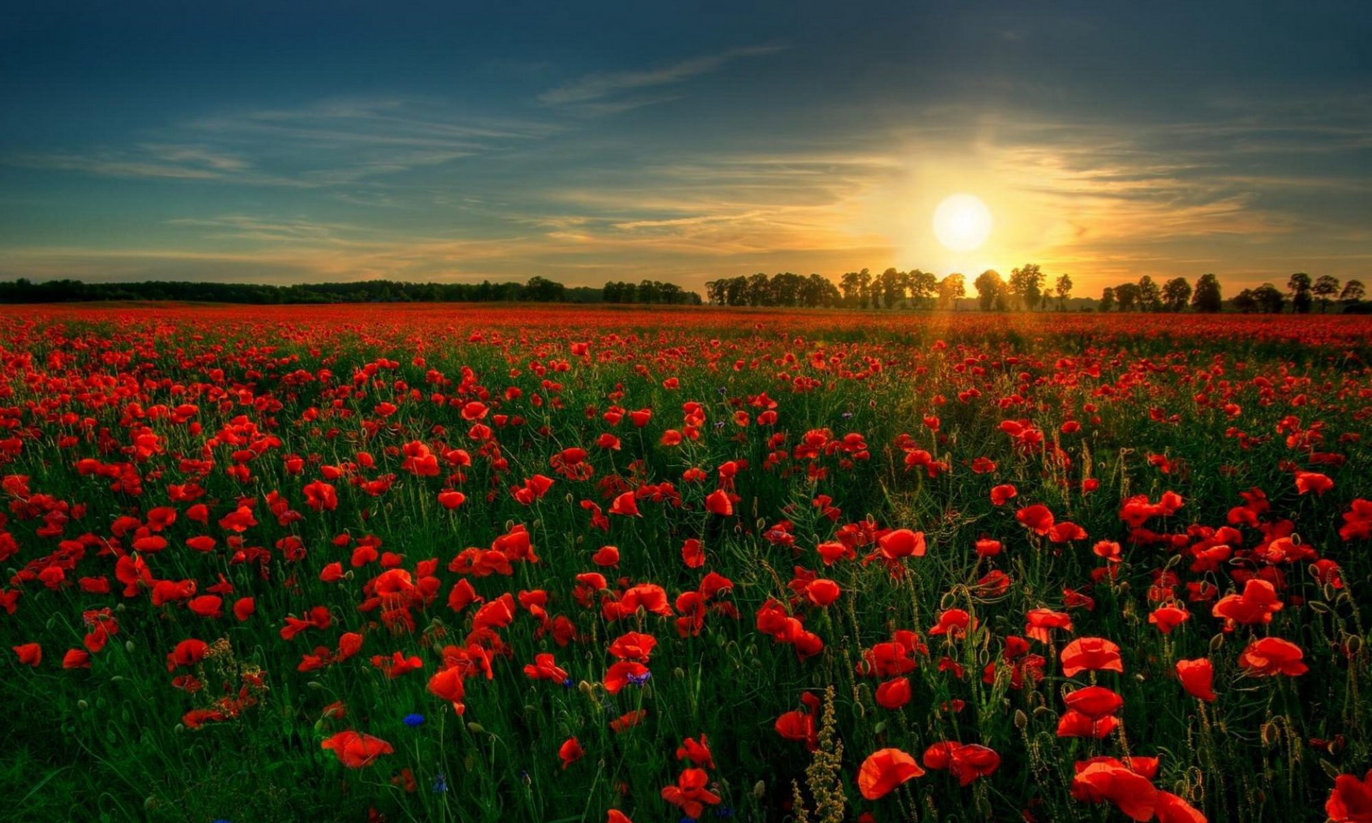 Welcome To Poppyseedtearecipe Your Complete Resource Community