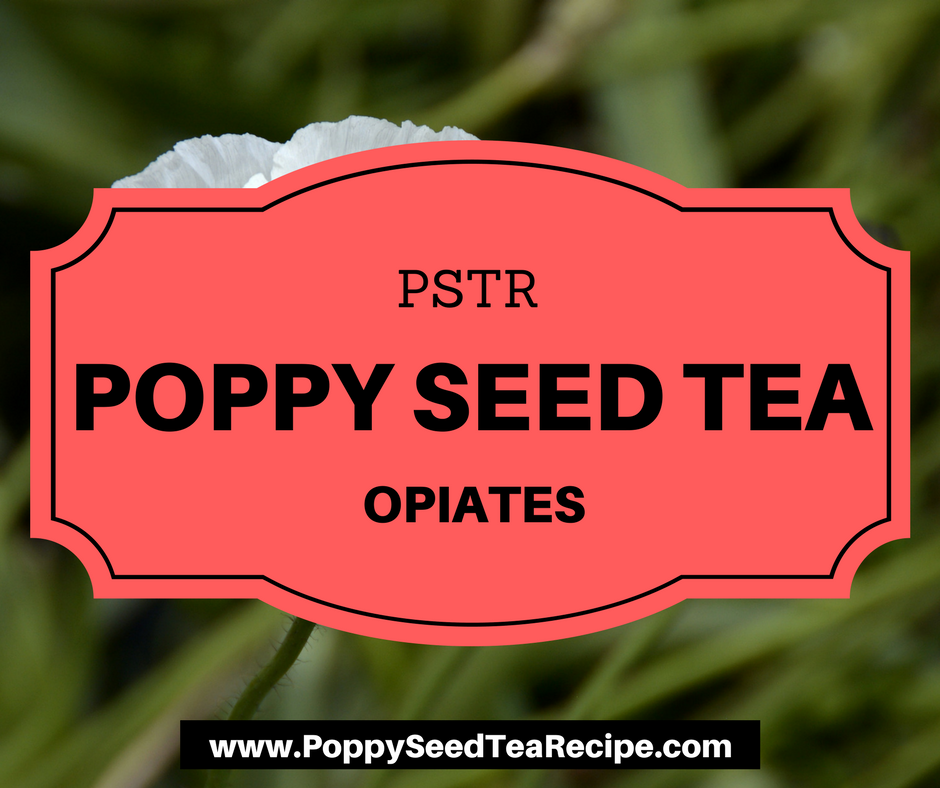 Poppy Seed Tea Opiates Discover Active Ingredients Of This Powerful Tea