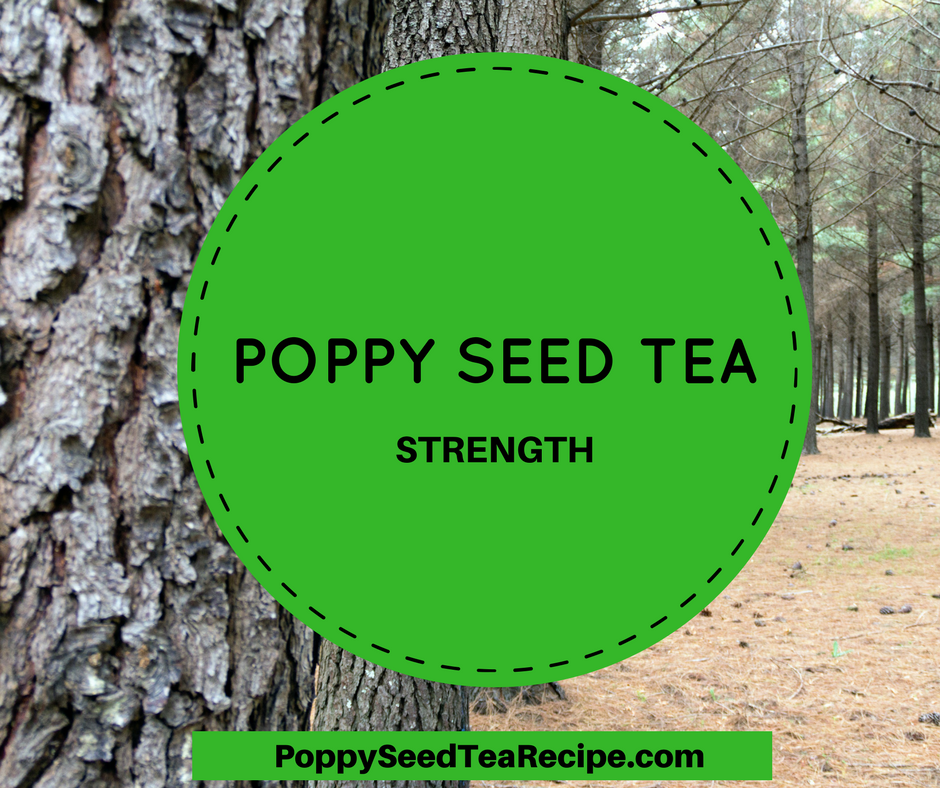 Poppy Seed Tea Strength How Strong Is Your Tea